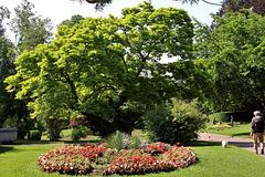Au jardin Lecoq .. La magnolia et le bichon