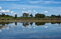 Janesmoor Pond, New Forest (2)