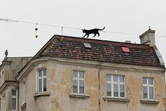 La chatte sur un toit glissant