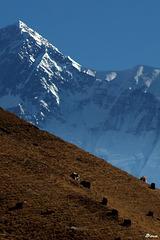 Région de Manang-Nepal