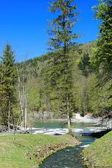 am oberen Ende des Staufensees (© Buelipix)
