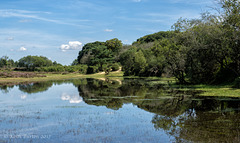 Janesmoor Pond, New Forest (1)