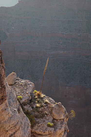 Grand Canyon, Cliffs