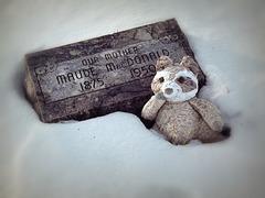 Teddy bear for company