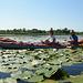 Киев, Среди лилий в протоках Ольгиного Острова / Kiev, Among the lilies in the channels of Olghin Island