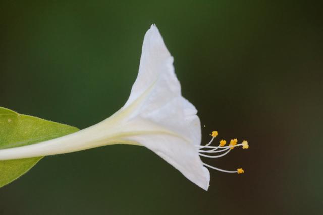 pollen flottant