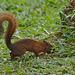 Squirrel EF7A4874