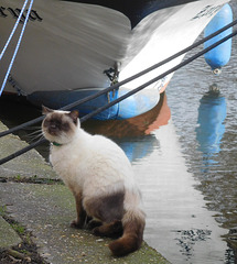 Cat by a canal