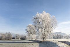 Frosty Morning (3)