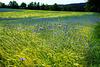 Biogerste für Biobier - Organic barley for bio beer