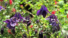 Flowers Of Spring,