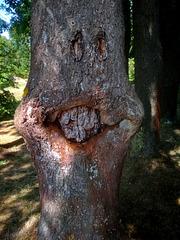 Baum-Pareidolie