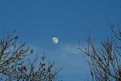 Camminer Mond
