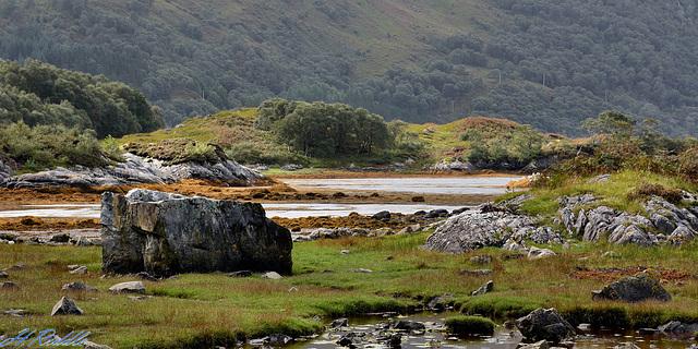 The banks of Loch Moidart
