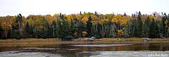 Birch, Spruce, & Hemlock