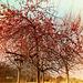 Per la gioia degli uccellini..l'albero delle meline selvatiche non si è ancora spogliato!