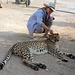 Namibia, You Can Stroke a Cheetah in the Otjitotongwe Guest Farm