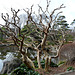 Tokyo,  In the Garden of the Imperial Palace, Without Leaves in Winter