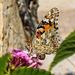 Papillon de l'été