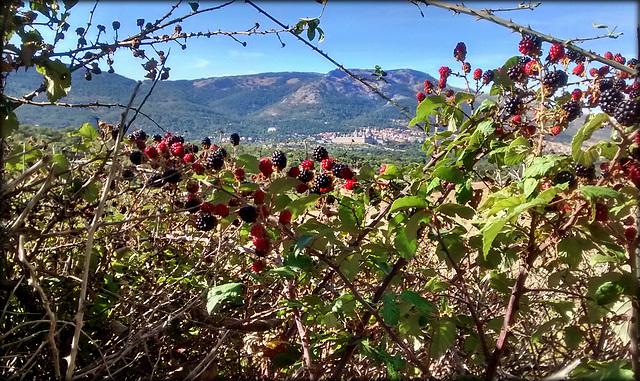 San Lorenzo de El Escorial and blackberries.
