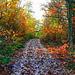 Wet leaf path