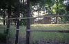 Grove where a shrine is