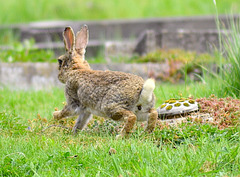 Bunny Hopping..... Woops !!