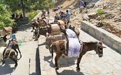La montée vers l'acropole et la descente peut se faire à dos d'âne