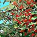 Berries Galore.