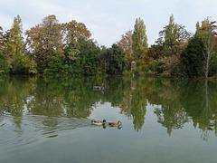 ...paysage d'automne...