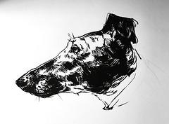 Hound head