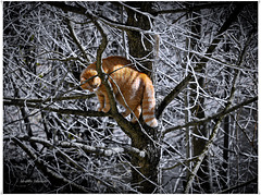 the cat in the tree ...