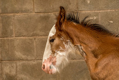 A close up of the foal