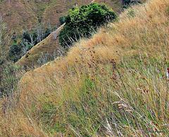 Grassy Hillsides.