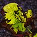 1 (1).herbst autumn