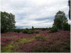 Rehrhofer Heide ➁