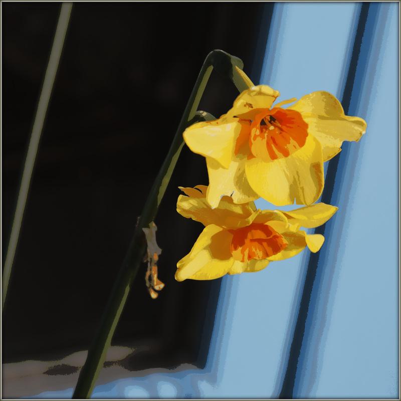 Portrait de fleurs (visions graphiques) 41102524.52393a80.800
