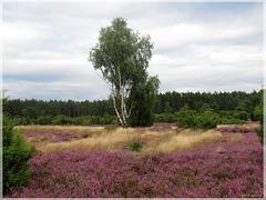 Rehrhofer Heide ➂