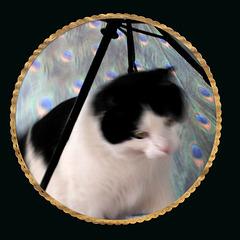 Kitty and the Umbrella (Explored)