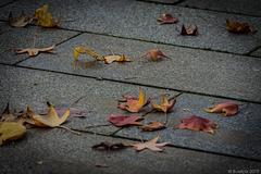 Herbst in Dresden (© Buelipix)