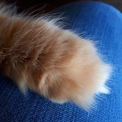 Katzenpfote macht warm ums Herz