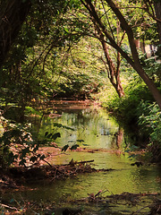 1 (58)..austria green jungle