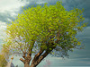 1 (53)..baum tree