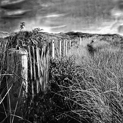 long fence across  the dunes