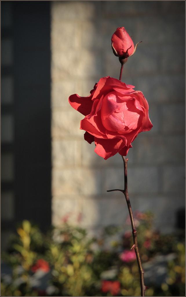 Une fleur par jour.... - Page 11 47632536.97f19889.1024