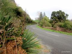 Woatu Road