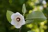 Schöne Blüte (Wilhelma)