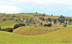 South Waikato Rock Formations