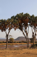 Looking into Samburu