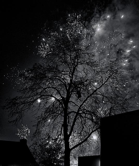 Fireworks tree